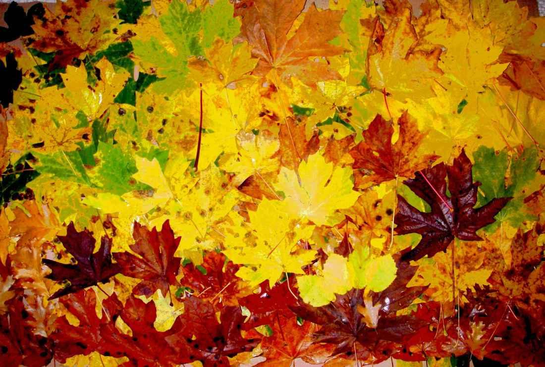 leaves_enhanced