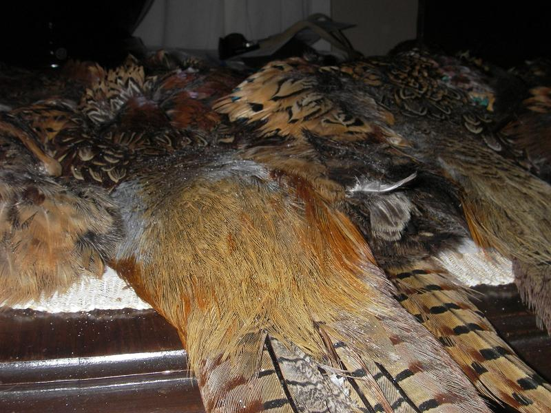 Choice rump feathers at the base of the tail.