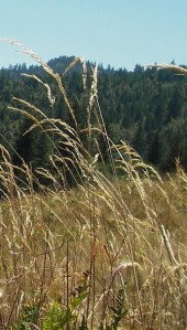 tall_grass and sun1